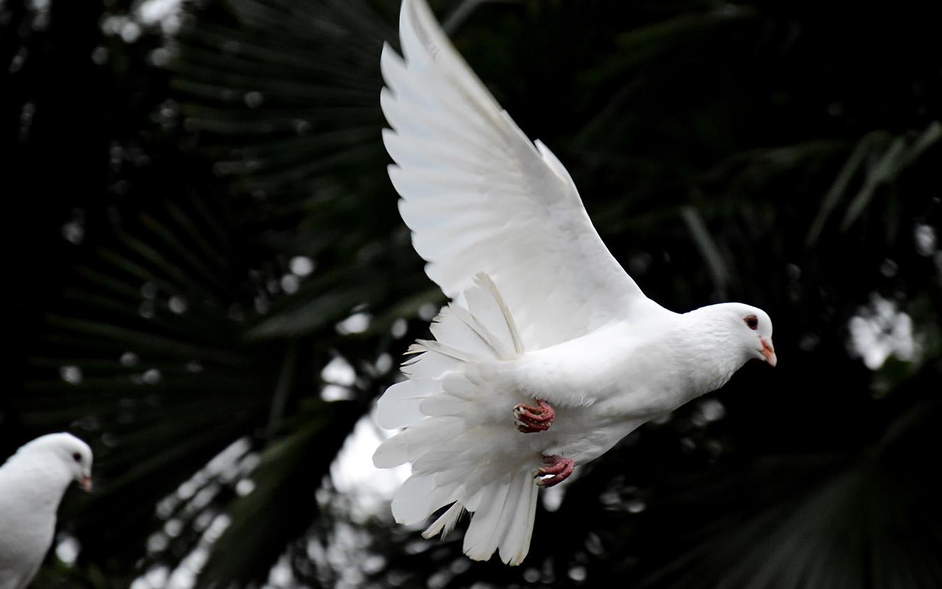 Terimalah Roh Kudus